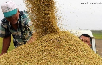Depolar çeltik dolu, pirinç ithalatı devam ediyor