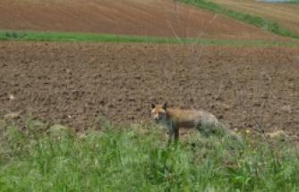 Hayvanlar Alemi (Edirne)